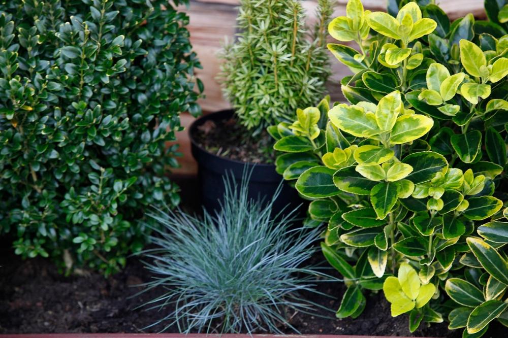 evergreens 2